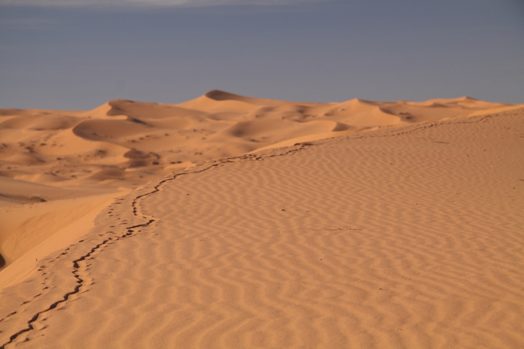 Tracks in the Sahara Desert near Merzouga, Morocco.